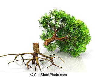 caído, árbol