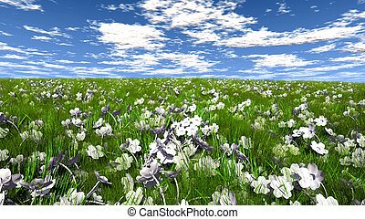 Grass field with white flowers