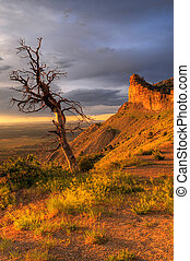 Dead Tree At Sunset - Golden Sunset after storm in Mesa...