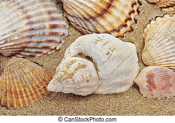 seashells on the sand - closeup of a pile of seashells on...