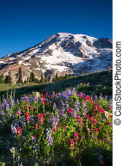 Rainier Wildflowers - The wildflowers of paradise on Mount...