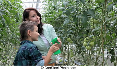 In the greenhouse - Woman and little boy looking at tomato...