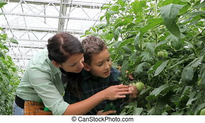 Plant care - Woman and little boy taking care of tomato...