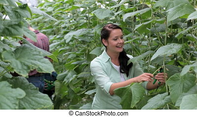 Family in greenhouse - Happy woman taking care of tomato...