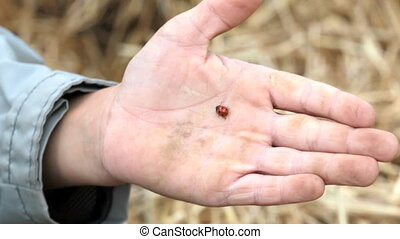 Boy with ladybug - Cute little boy showing his palm with...