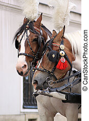 Cracow - Beautiful horses in polish Cracow
