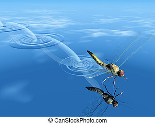 Dragonfly flying over water
