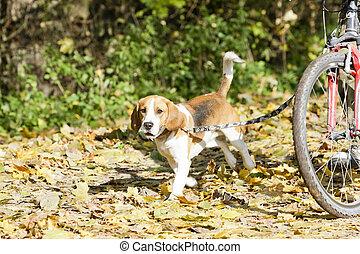dog on dog leash
