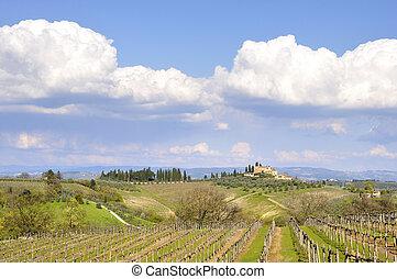 Vineyard in Tuscany, Italy