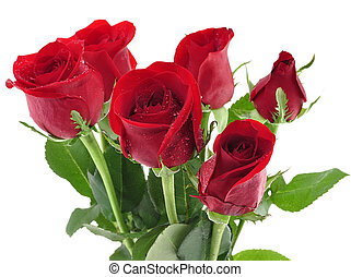 red roses with water drops , close up