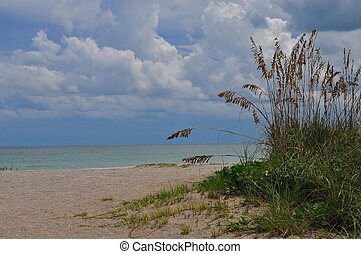 Tranquil Beach with sea oats