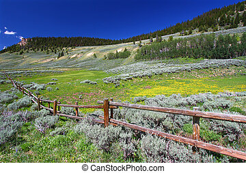 Bighorn National Forest Scenery - Beautiful wildflowers...