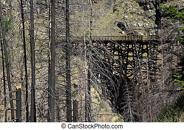 Burned trees by Myra Canyon trestle - Myra Canyon with...