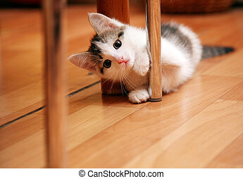 Curious funny kitten in activity game
