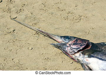 Swordfish is large, highly migratory, predatory fish...