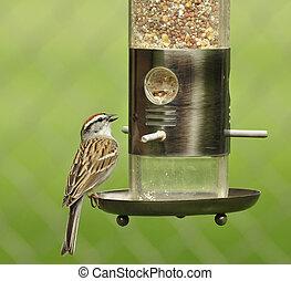 sparrow  - a sparrow on a birdfeeder