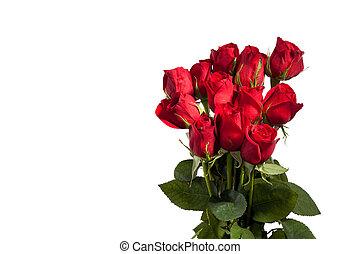 Dozen Red Roses - Dozen red roses isolated on white...
