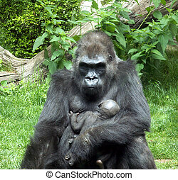 One Mean Mama - Gorilla with baby