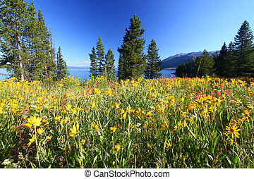Wildflowers in Grand Tetons - Pretty wildflowers grow near...