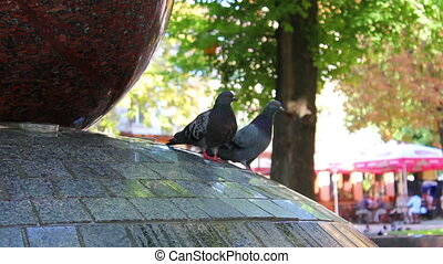 Pigeons in fountain
