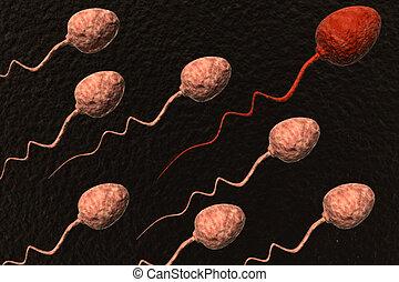 esperma, células, Competir