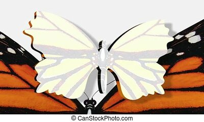Rotating butterfly