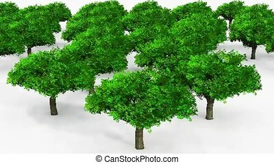 trees, aerial view