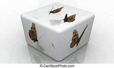 butterflies flying around white cube