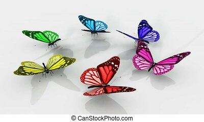 Beautiful colored butterflies