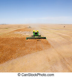 Combine - A green combine in a lentil field on the open...
