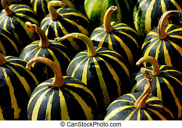 Gourds - Green-yellow small stripy gourds close-up...