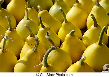 Gourds - Small yellow pear-shaped gourds close-up background