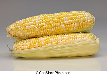Sweet Corn - Sweet corn closeup isolated on gray background