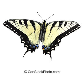 Yellow Butterfly - Eastern Tiger Swallowtail Butterfly on...