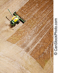 Combine in Field - Green harvester combining a field of...