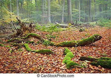brumoso, día, otoño, bosque