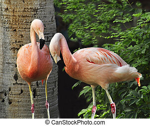 Pink Flamingos in the tropical park