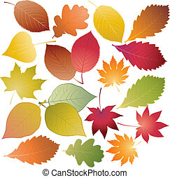 Set of colored leaves