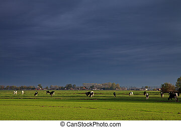 Landscape with grassland and cows