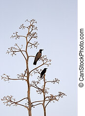Two birds on light-blue background - Two birds on branches...