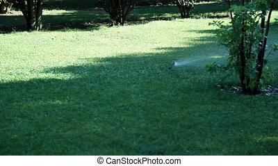 Sprinkler in garden, shoot Canon 5D Mark II