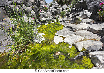 Stream with green ooze - Canyon with cut basalt walls and a...
