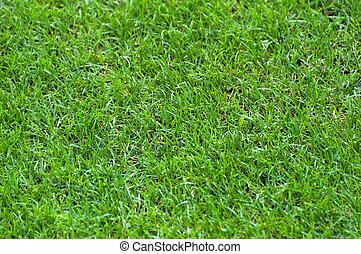 Football Stadium Grass - background green grass of a...