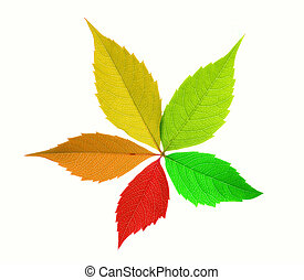 Colorful leaf isolated on white background