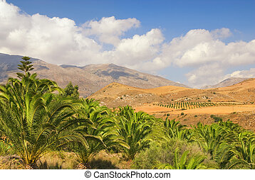 Beautiful landscape view to the palm grove with nice...