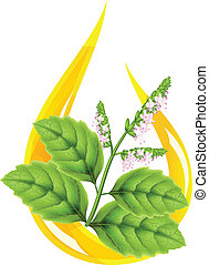 Essential oil of patchouli (Pogostemon cablini). Stylized...