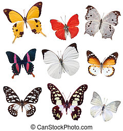 butterflies - many species of butterflies on white...
