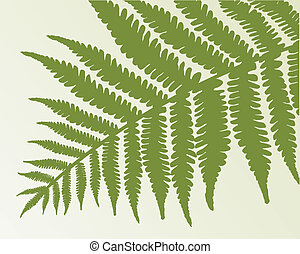 Single fern frond isolate object