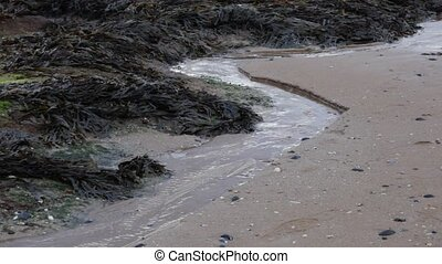 Sea water flowing back to sea at low tide