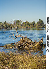 Zambezi river at noon, with dead tree trunk in the...